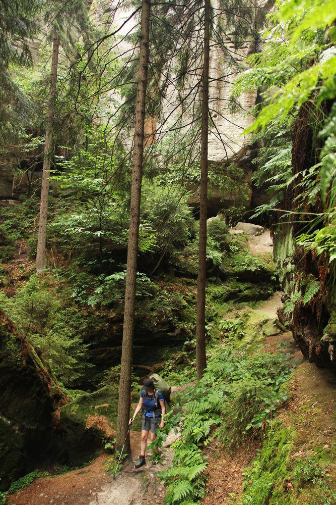 Durch den Wald auf dem Malerweg mit zelt