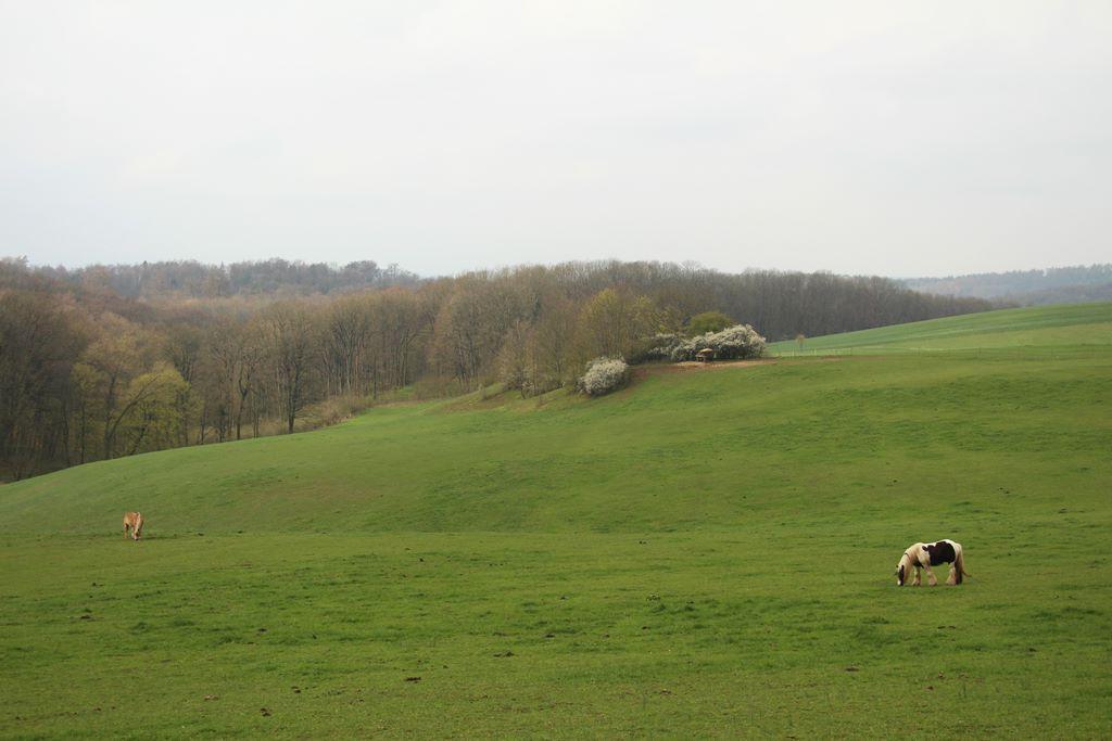 Rennsteig Thüringer Wald grüne Weide