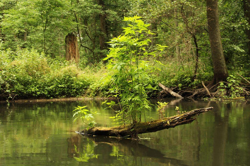 Toter Baum spendet Leben