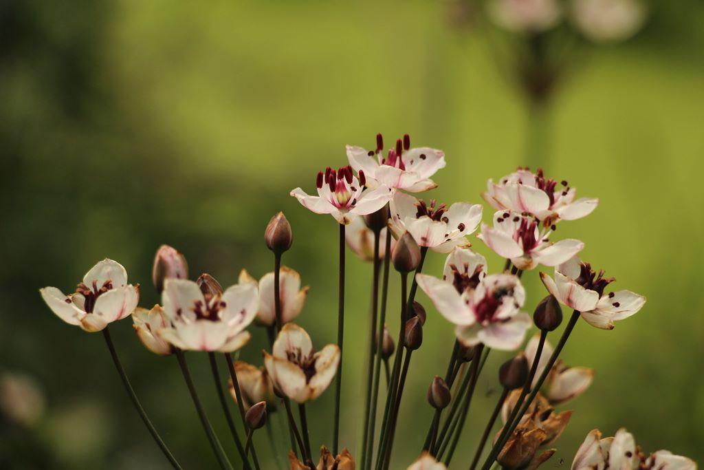Blüten einer Blume