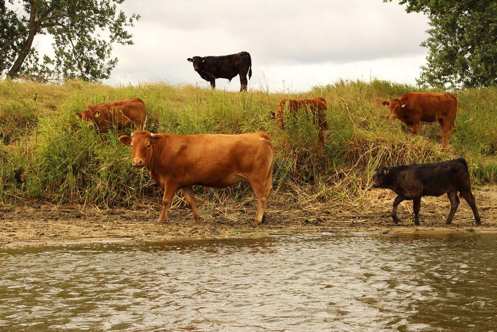 Outdoor Wasserfilter unterwegs Wasser aufbereiten in Polen