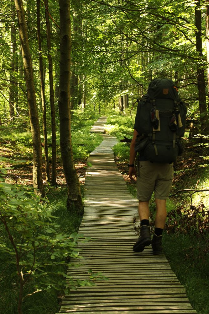 Steg im Wald 2