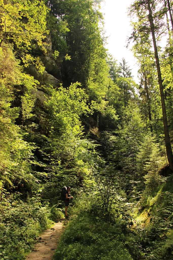 Traumahfter Schluchtenwald am Malerweg