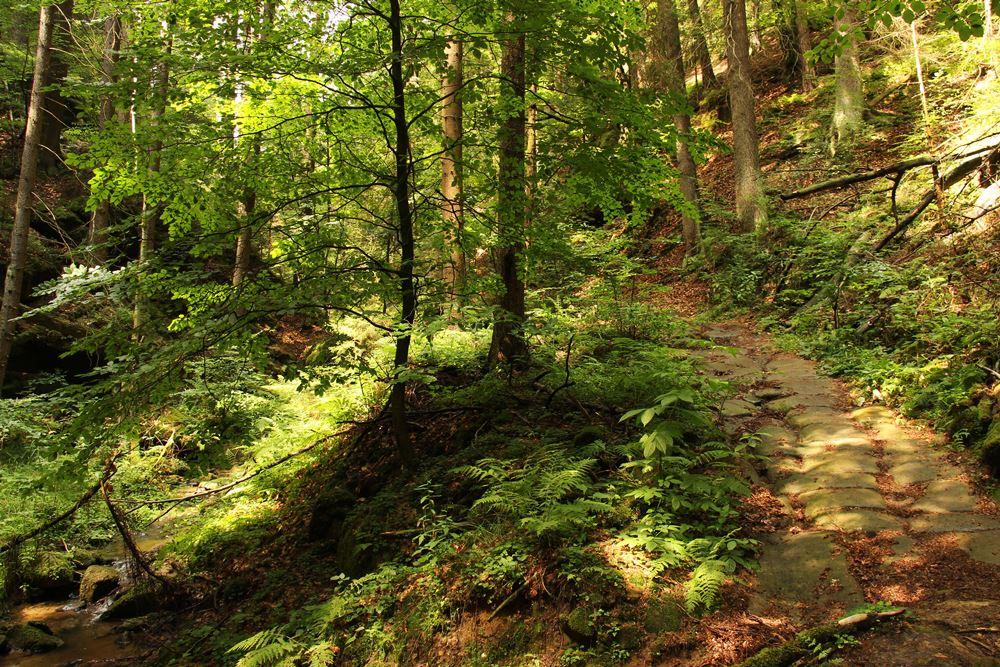 Waldidylle auf dem Malerweg
