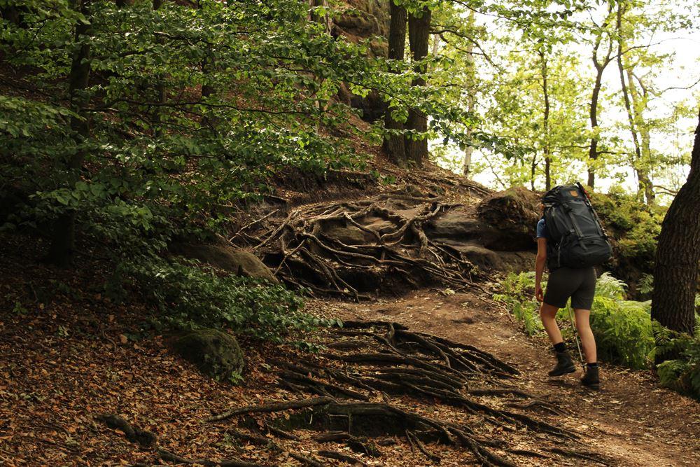 Locke auf Waldwegen auf dem Malerweg