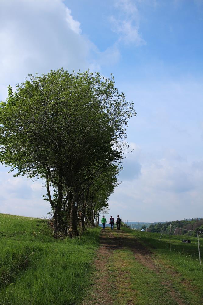 Feldweg im Vogelsberg