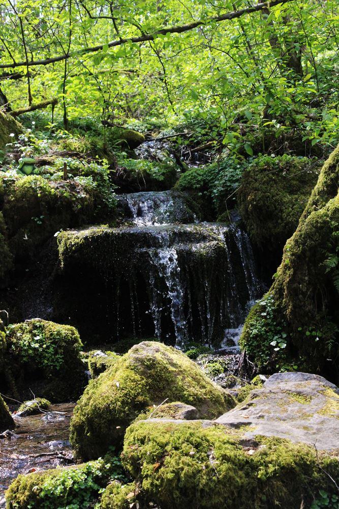 Wasserlauf am Wanderwege im Vogelsberg
