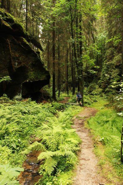 Bachlauf im Wald am Malerweg