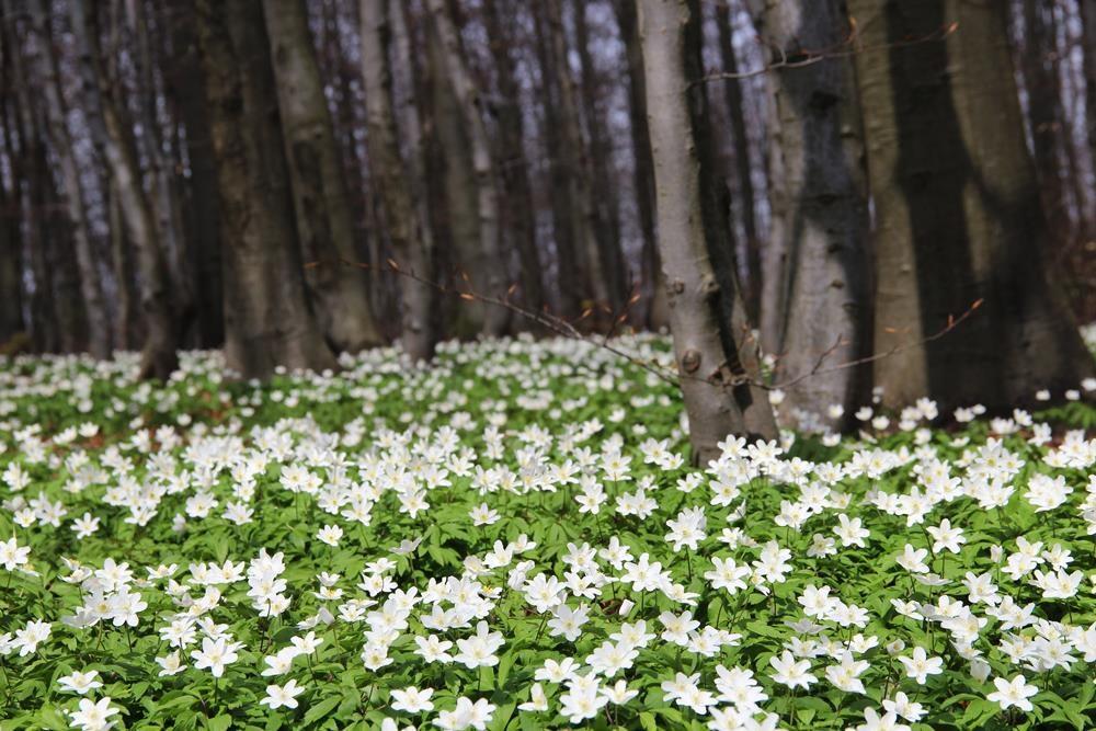 Wanderwege im Vogelsberg Blumen